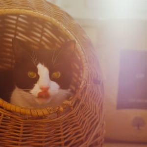 ESSENTIAL FOODS till katten