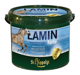 Lamin_Forte