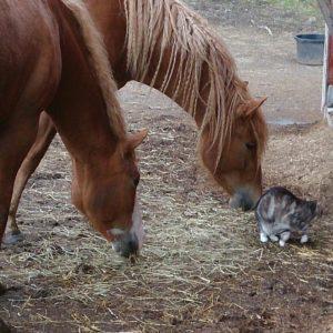 Hästvård