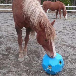 Happy Hay Play