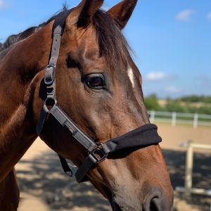 MmHalt Grimma Mink Horse